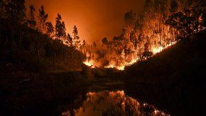 при пожаре в Португалии