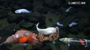 подводную
