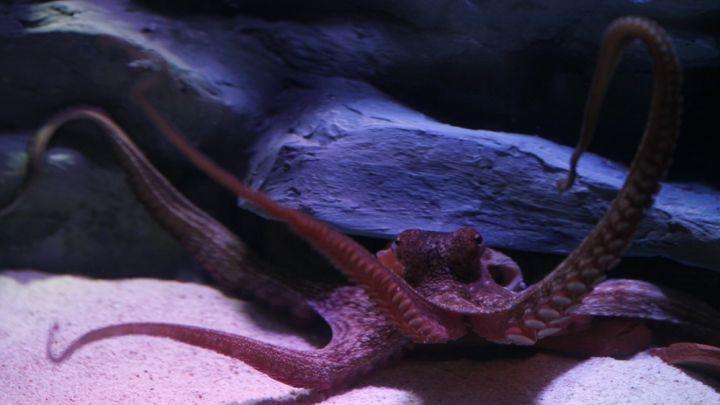осьминогов