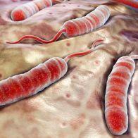 холеры