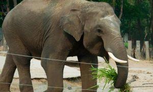 слоном