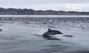 дельфинов