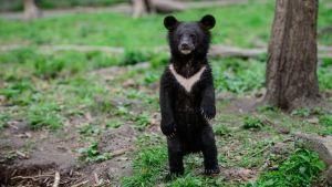 медвежонка