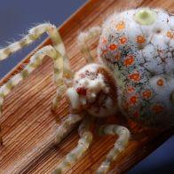 паука