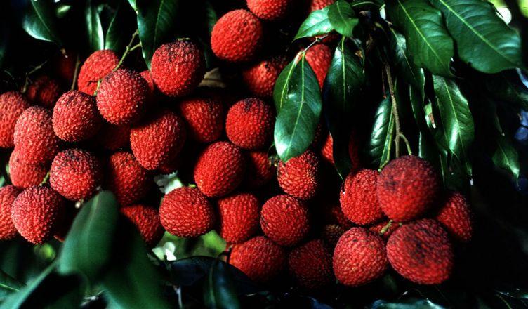 От употребления плодов