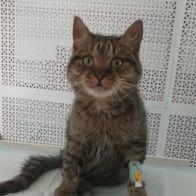 котом