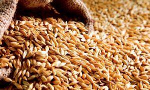 урожая зерна
