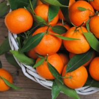 мандаринов