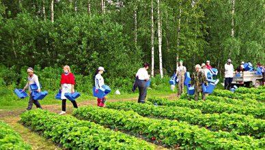 Украинцев