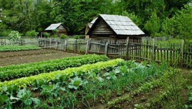 собрать урожай
