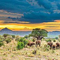 Танзанию