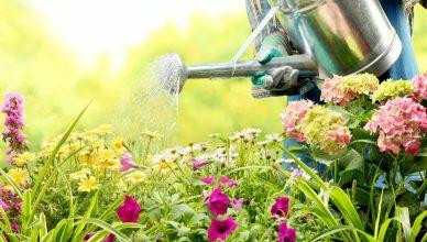 Садовника