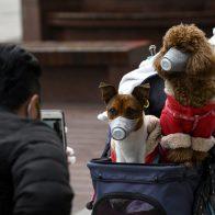 Первая в мире вакцина от коронавируса для животных зарегистрирована в России