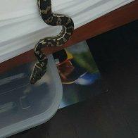 людей змеями